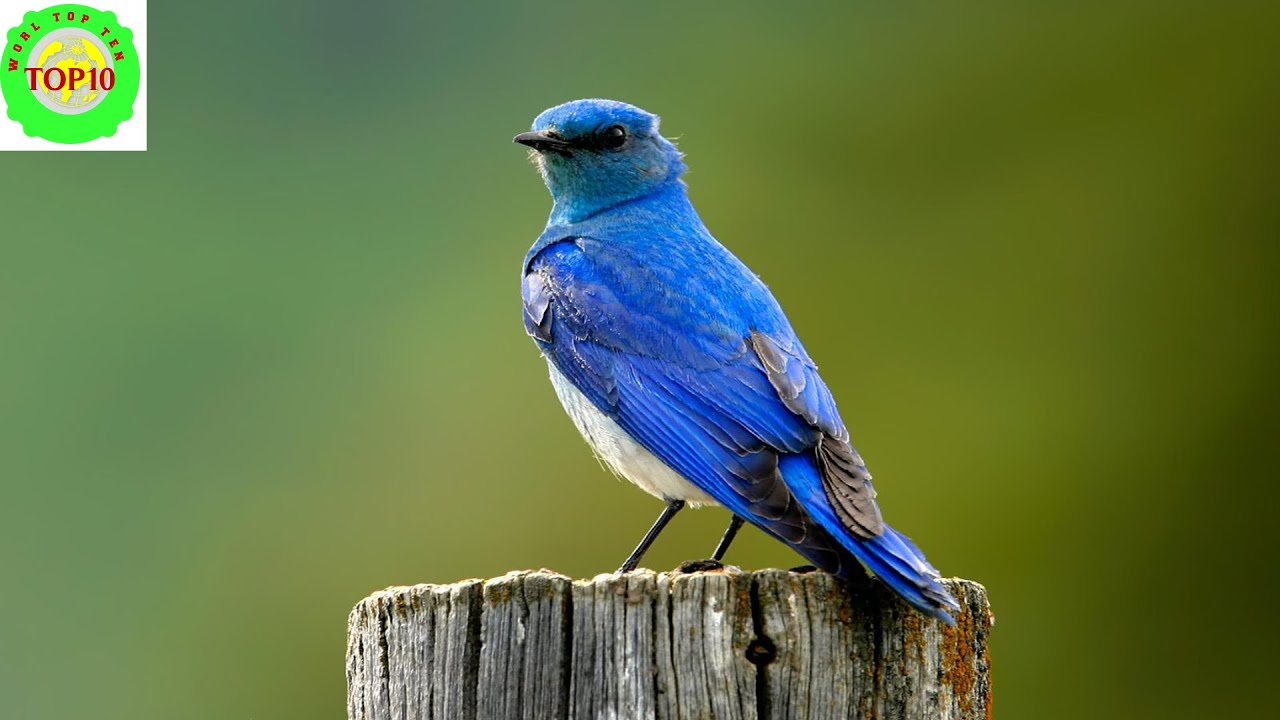top 15 most beautiful u s state birds youtube