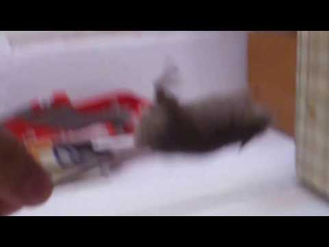 Мыши лазиют по стенам