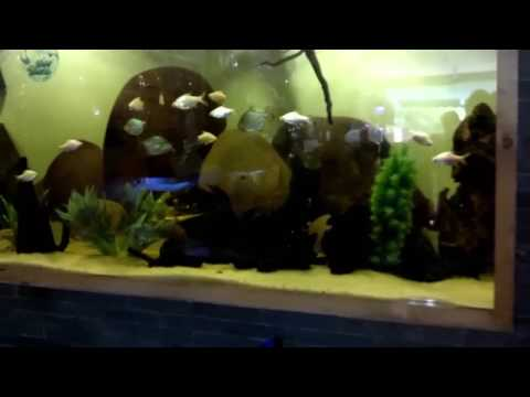 Fish aquarium shops in lahore fish pet store near me for Where to fish near me