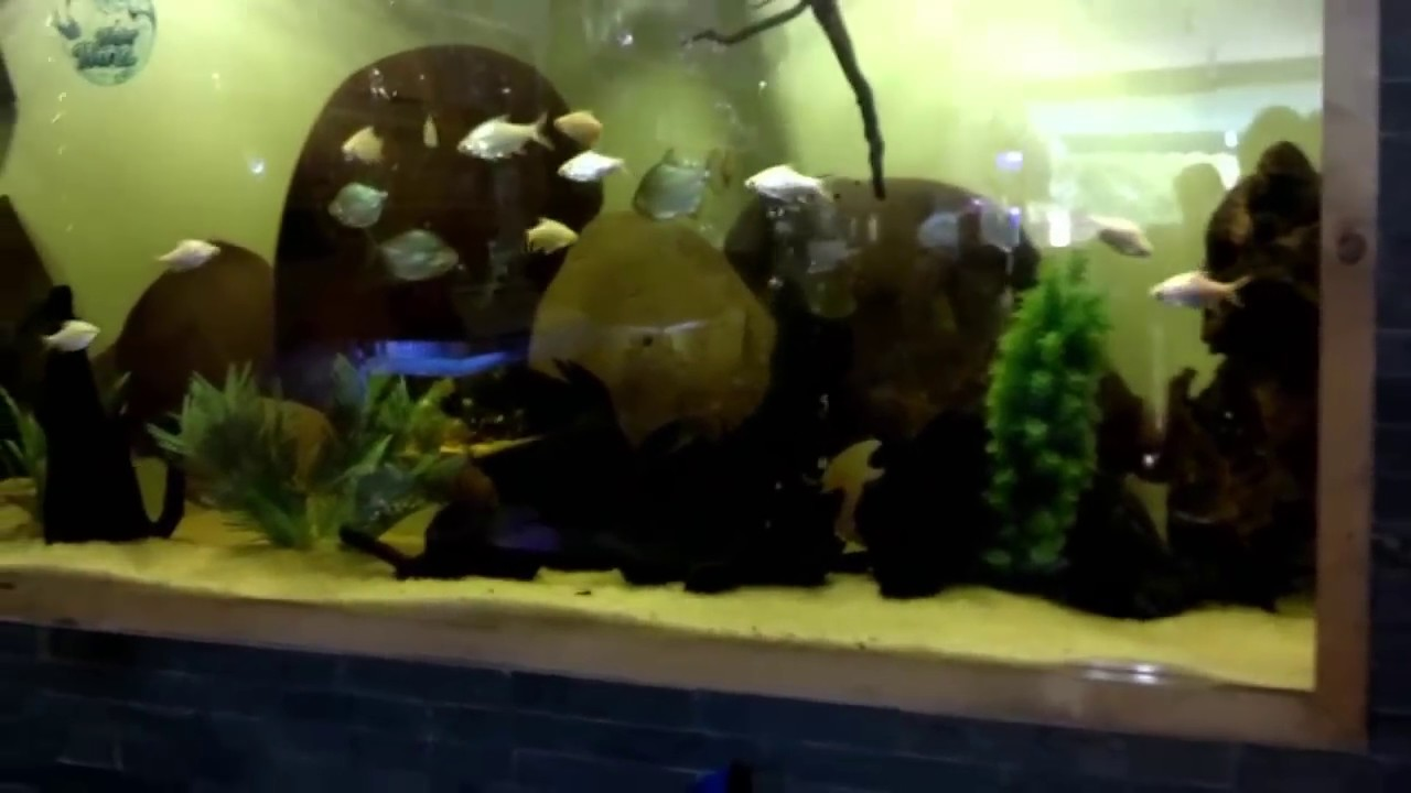 Where Nearest Fish Shop