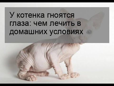 Почему у котенка гноятся глаза как лечить в домашних условиях