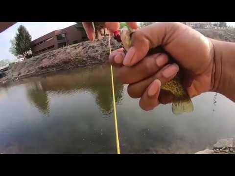 Fishing for Rock Bass Buck Creek