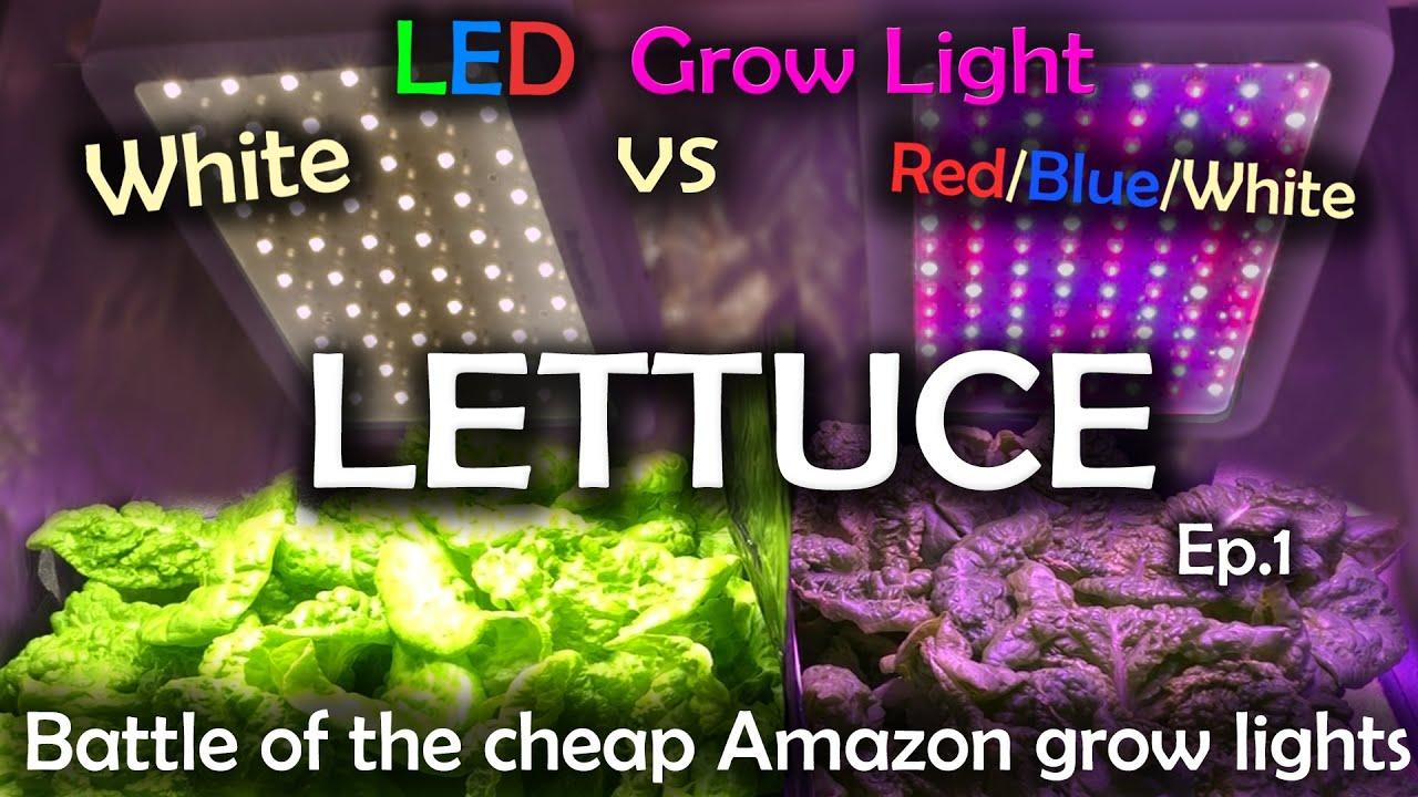 White Led Vs Red Blue White Led Grow Test W Time Lapse Lettuce Ep 1