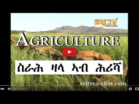 Eritrean Farmer Benefits from Srah Sala - Agriculture - Eritrea TV