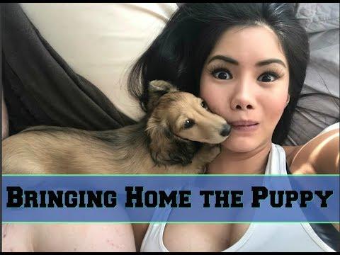 Bringing Home My Wiener Puppy! VLOG