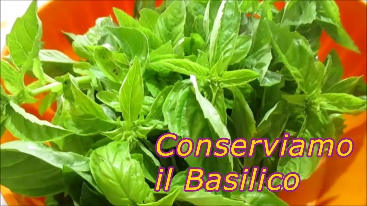 Conservare Il Basilico Per Averlo Sempre A Disposizione