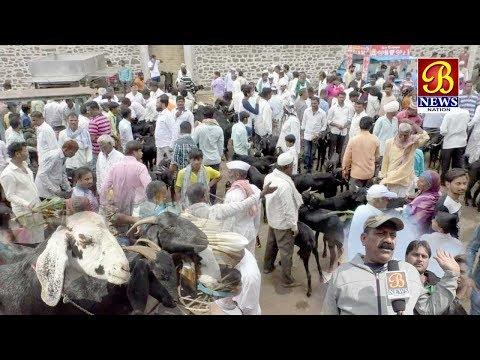 Bakrid Special Bijapur ki Bakra Mandi. 19/08/2018