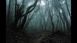 Лесной коп. Хорошо отдохнули.