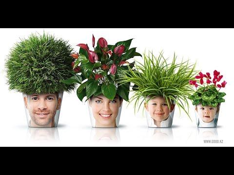 Ученые назвали полезные комнатные растения