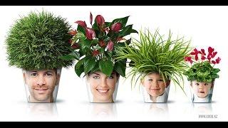Полезные домашние растения!