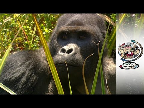 The Mineral Which Powers Your Mobile Phone Also Fuels Endless Violence in the Congo (2009)