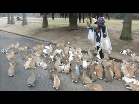 Rabbits: Bunny island in Japan; Pet rabbit died, woman crashes car because of tears - Compilation