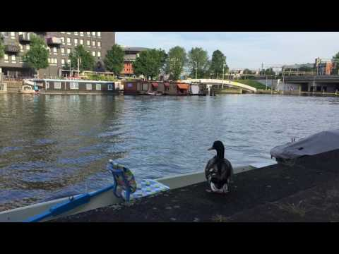 Amsterdam Ducks Summer Love  film Apple Iphone 6 by Stan Rams