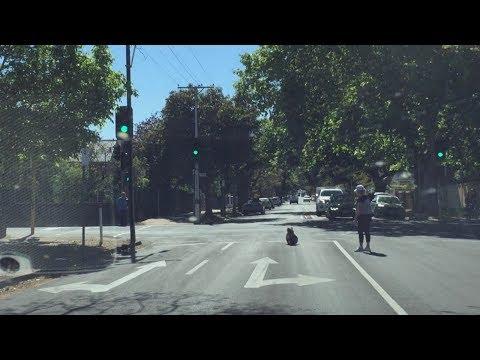 Un koala australiano se convierte en el rey de la carretera