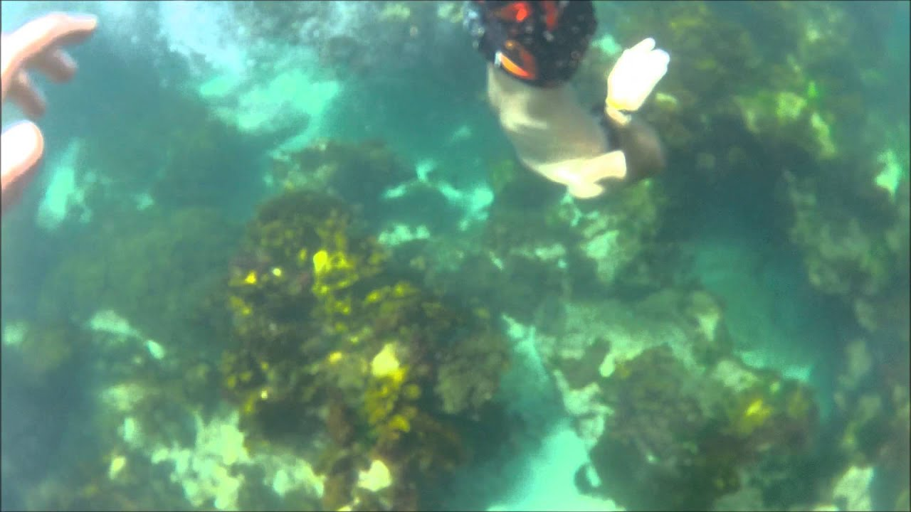 Snorkeling at mettams pool youtube - The last picture show swimming pool scene ...