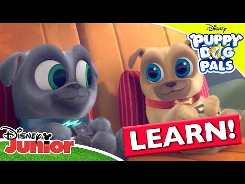 Learning The Countries of the World 🌍| Puppy Dog Pals | Disney Channel Africa