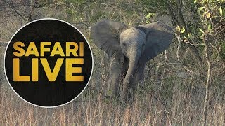 safariLIVE - Sunrise Safari - June, 14. 2018