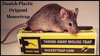 Danish Plastic Origami Mousetrap - Does It Work? thumbnail