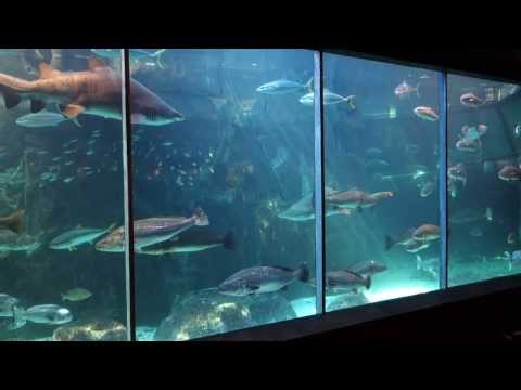Fish feeding at Two Oceans Aquarium, Cape Town, South Africa, August 15, 2013