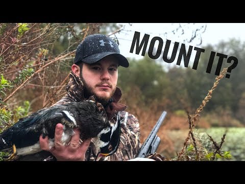 Wood Duck Hunt In The Rain - Is It Mount Worthy?