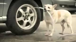 Dog heart touching  video