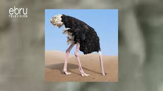 How Ostrich Protect Themselves From Danger