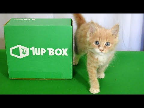 My LAST 1UP UnBoxing Video Ever (with Baby Kittens)