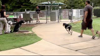 Distraction Training, Gus And Dex:  Dog Park And Manners