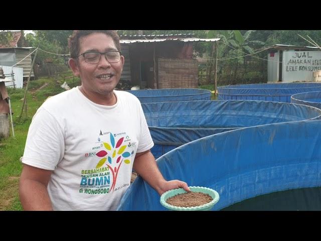 Ternak LELE dengan kolam terpal untuk PEMULA