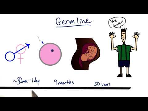 Germline - Tales from the Genome