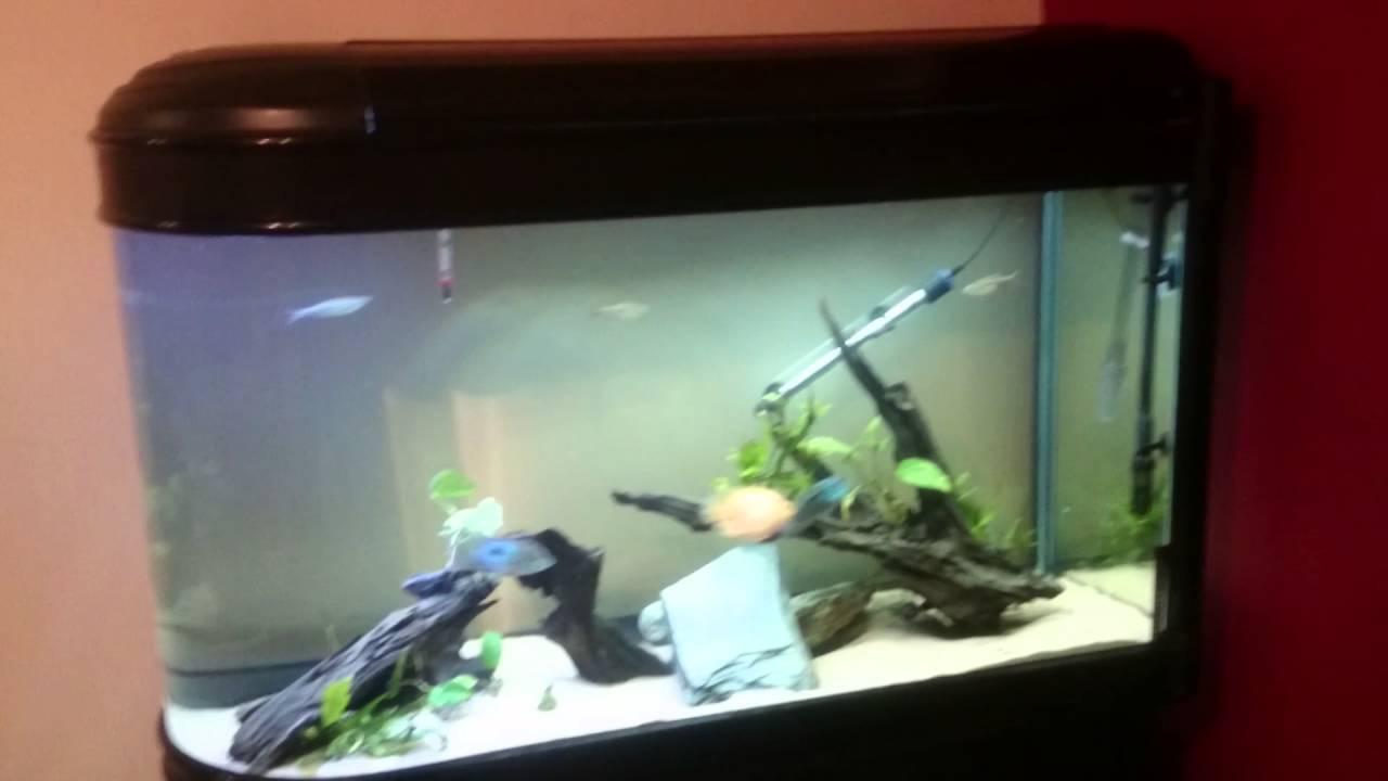 Aps all pond solutions l bullet aquarium boyu zdt