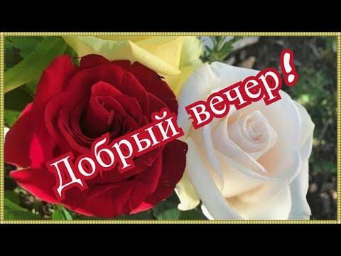 🌹Добрый вечер! 🌹Очень красивое Пож🌹елание с Добрым Вечером!