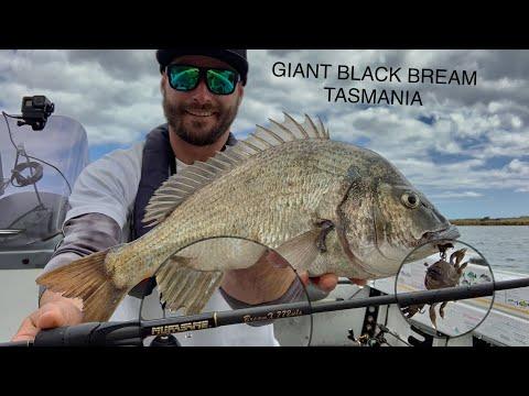 Giant Black Bream Tasmania