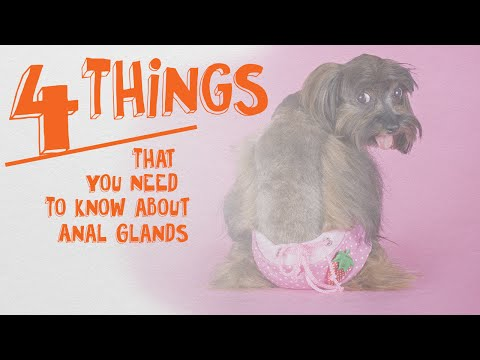 The 4 Things You Need To Know About Anal Glands
