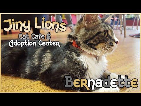 Our First Visit & Meeting Bernadette • Cat Café & Adoption Center - Episode #1