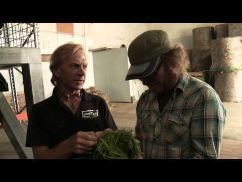 Hemp Farm New Zealand