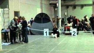 Всероссийская выставка собак 30.10.2010, Санкт-Петербург