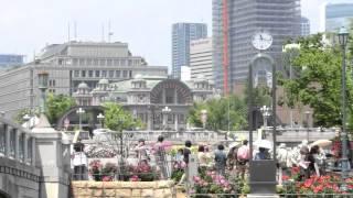 中之島バラ園はすばらし~い!(2014年5月) thumbnail