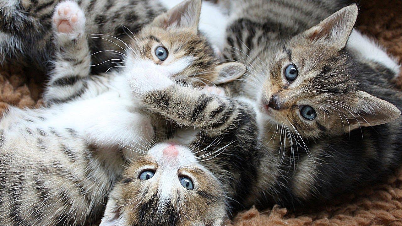 Cucciolata Cuccioli Gattini Mamma Gatta Momenti Di Dolcezza E