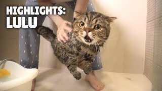 Highlights of LuLu the Cat | Kittisaurus
