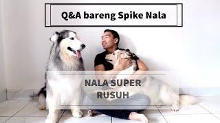Q&A with Spike and Nala - Vlog