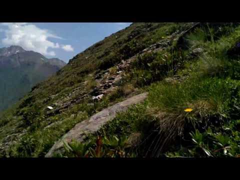 Parnassius nordmanni. Приэльбрусье, гора Чегет, 2800м.