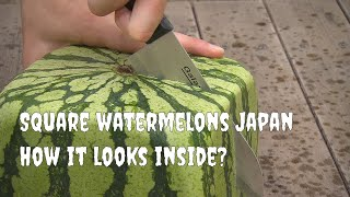 Square watermelons Japan. English version thumbnail