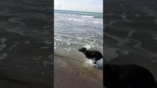 VIDEO Lady Zielinski in spiaggia col suo labrador Mia