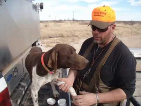 Steve Explains Musher's Secret -- Gun Dog Supply