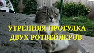 УТРЕННЯЯ ПРОГУЛКА ДВУХ РОТВЕЙЛЕРОВ.Воспитание и дрессировка собак