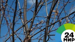 Весна началась: в Азербайджане отмечают вторник ветра - МИР 24