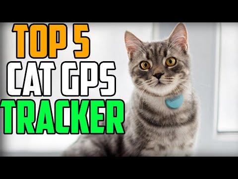 Gps Pet Tracket Top 5 Best Cat Gps Tracker 2020