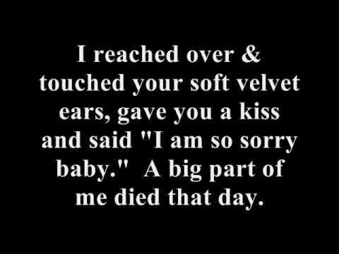 The Day I Died Lyrics