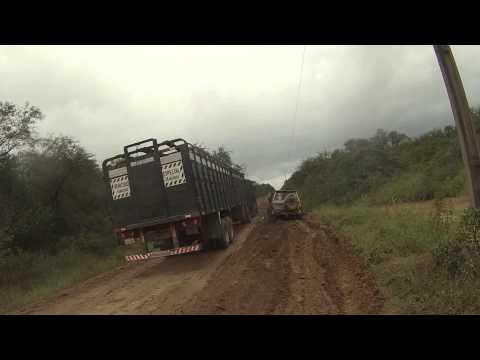 Rebasando camiones  transportadores de ganado en el chaco, camino Filadelfia - Fuerte Olimpo